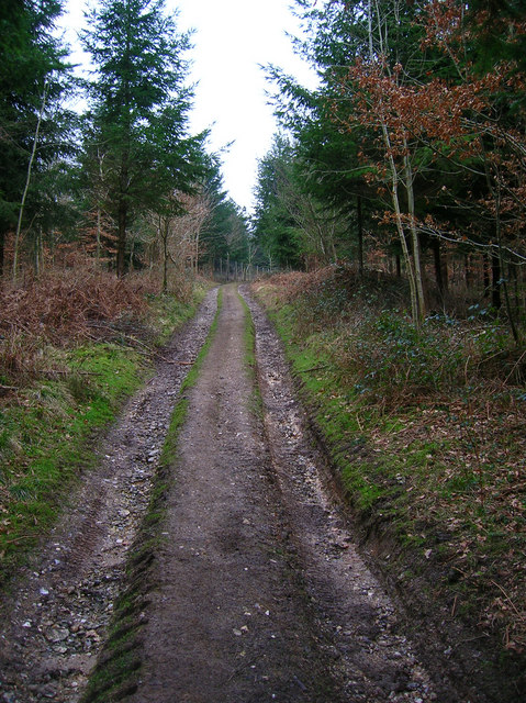 Forestry Track, Winden Wood