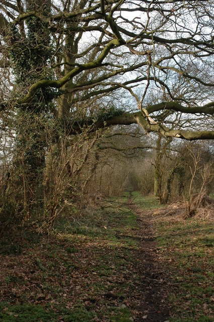 Bridleway to Croome Perry Wood
