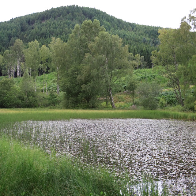 Pond in Logierait Wood