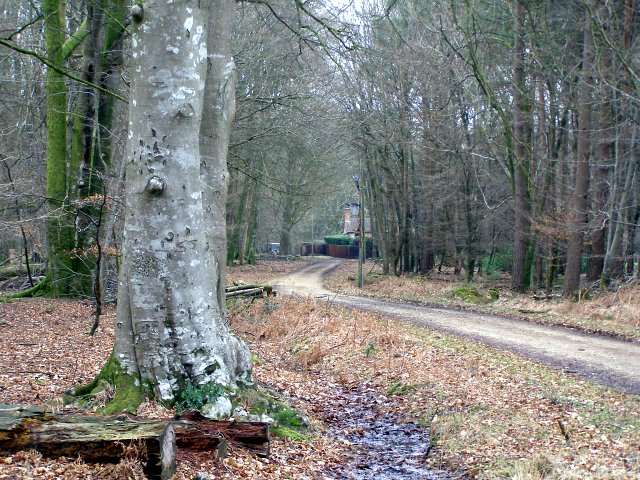 Track to Woolfield Cottage, Burley Outer Rails Inclosure, New Forest