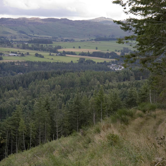 Woodland in Tummel Valley, south of Pitlochry