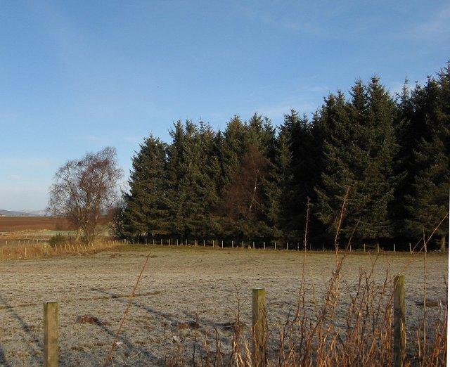 Shrunken field.