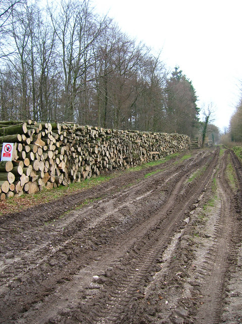 Timber Stacks, Stubbs Copse