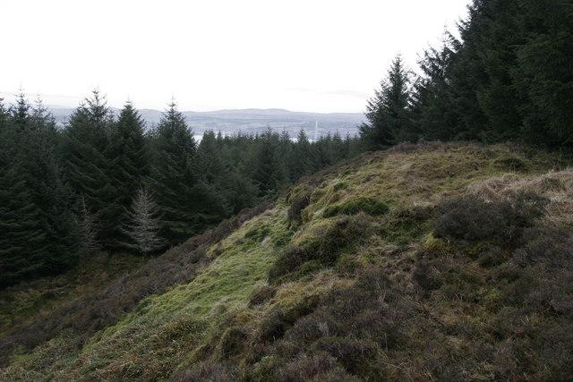 Deep in Innellan forest looking east towards Inverkip chimney