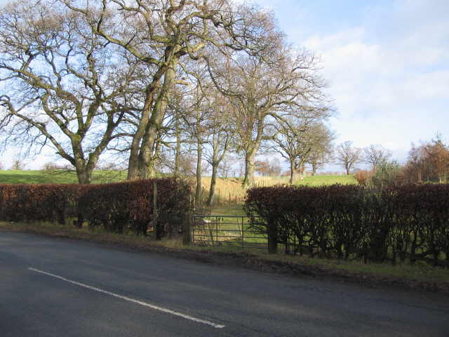 Footpath to Ratten Row