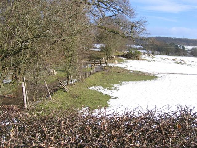 Sheepfield near Llanarmon yn Ial