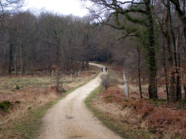Track through Burley Outer Rails Inclosure, New Forest
