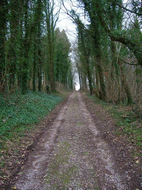 Track, Whitedown Plantation