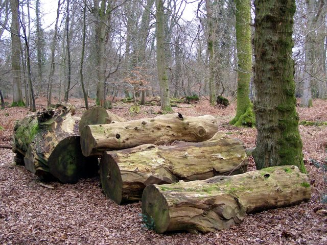 Logs, Burley Outer Rails Inclosure, New Forest