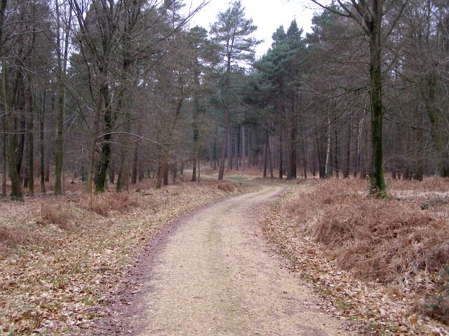 Track through Burley New Inclosure, New Forest