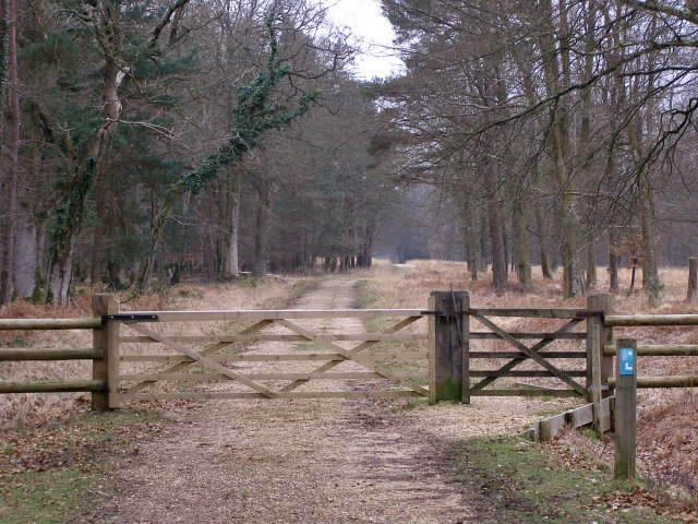 Gateway to Burley New Inclosure, New Forest