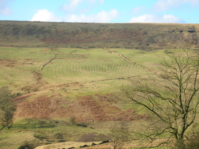 Field with ridges