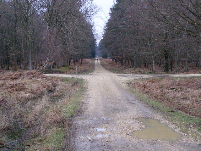 Track crossroads, Dames Slough Inclosure