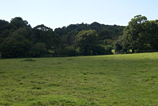 Pasture near Yealmpton