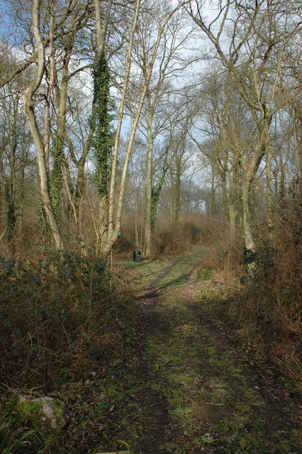 Great Blaythorn Wood, Drakes Broughton