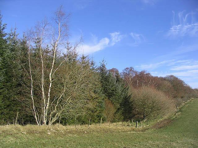 Droveroad Plantation