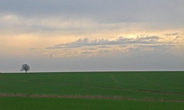Winter Barley Sixpenny Handley