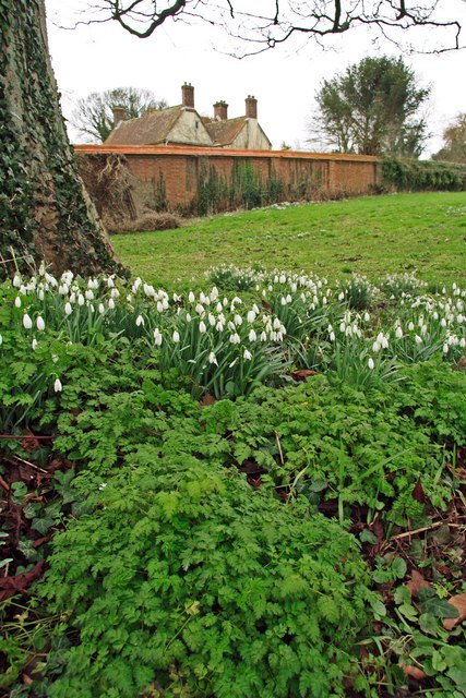 Snow drops Pentridge