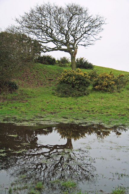 Winter reflection in water logged hollow