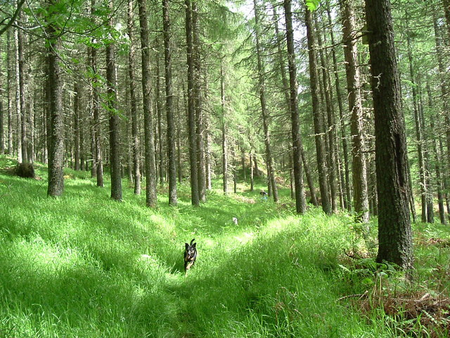 Strathconon Wood