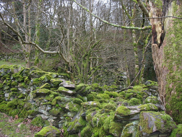 The moss covered ruin of Bron-y-gadair,  a former Clegyr smallholding