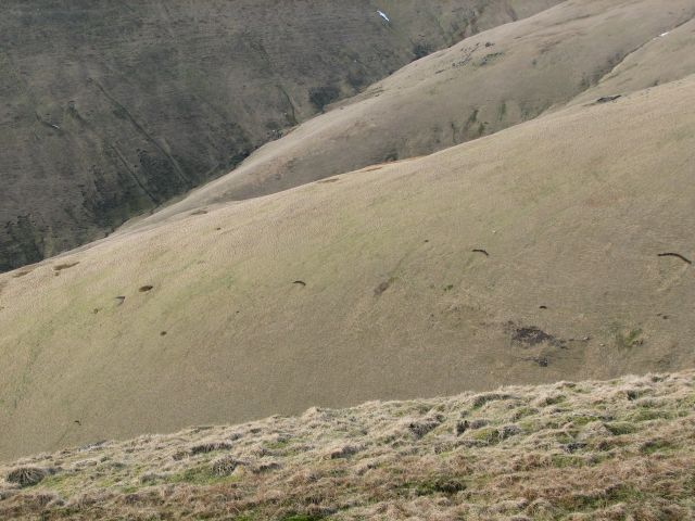 Southern slopes of Ben Cleuch