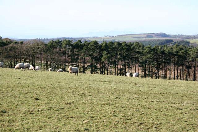 Hillhead of Gilminscroft