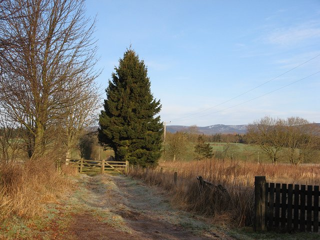 Path to Oathlaw