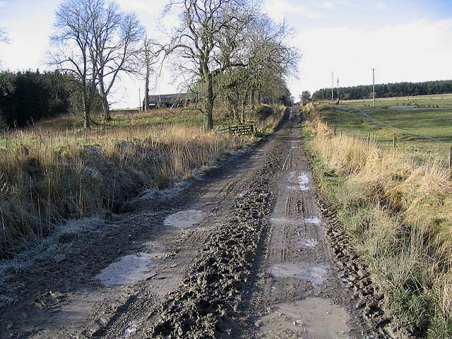 Farm track at Hassendean Common