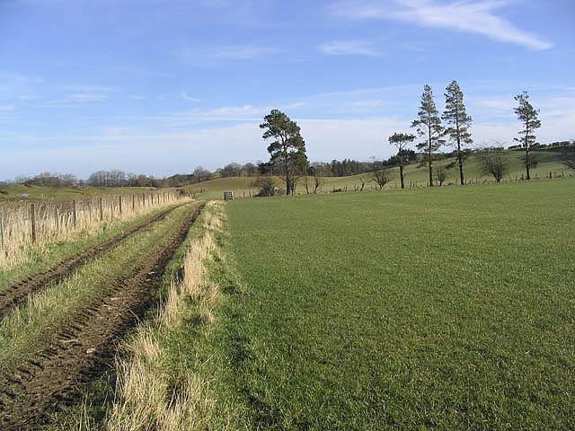 Farm track and pasture