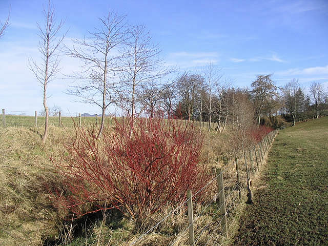 Planted set aside strip
