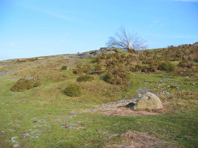 Heathland on the lower slopes of Moel yr Henfaes