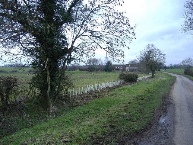 New hedge on Crudwell Lane