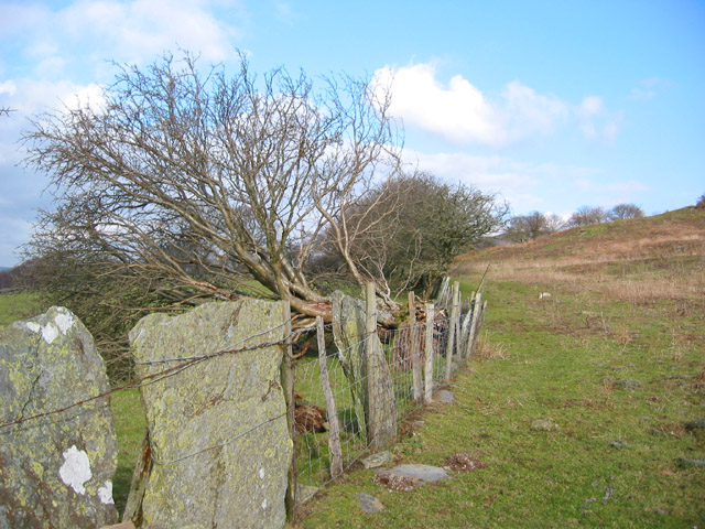 Field boundary with fallen tree and split stones