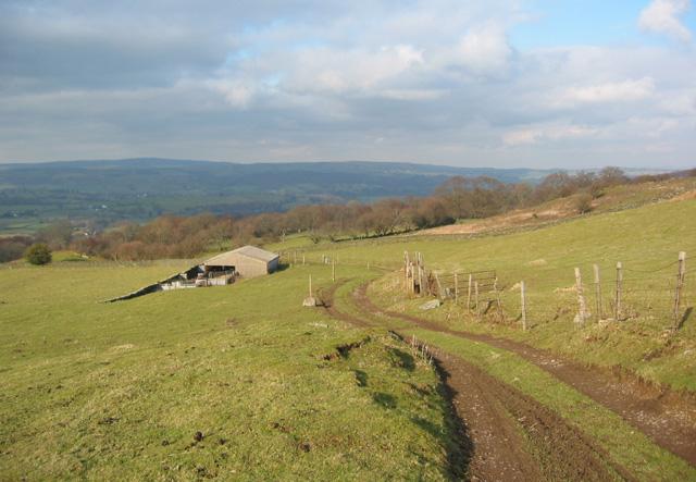 Winter sun on sheep pasture