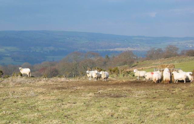 Sheep pasture with a view