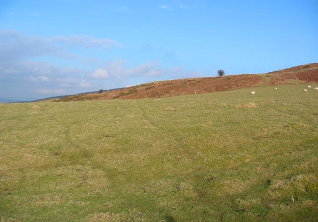 Pasture and heath on Moel yr Henfaes