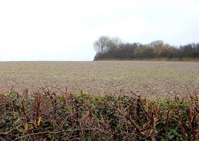 A field with Hedge in Foreground