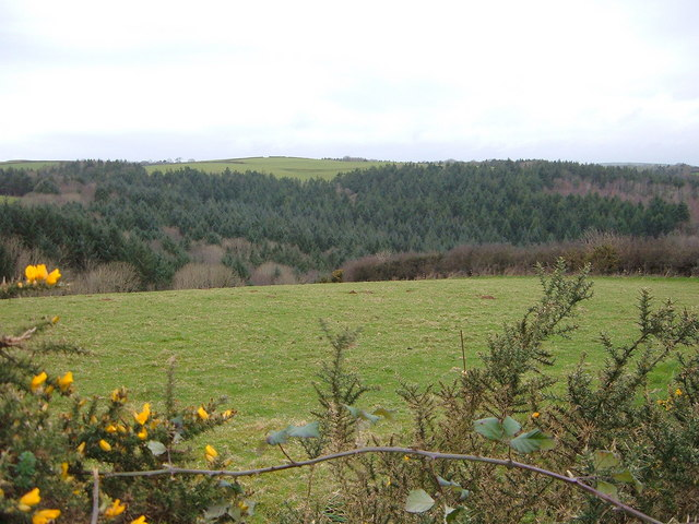 View out towards Woods near Polbathic