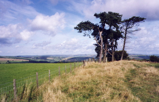 Pine trees on Offa's Dyke Path