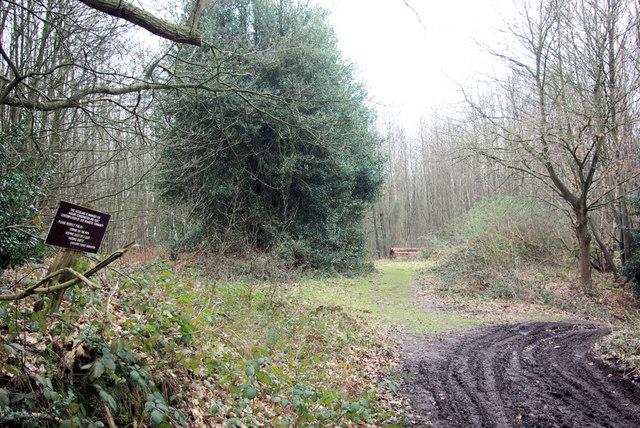 Monastic Woodland
