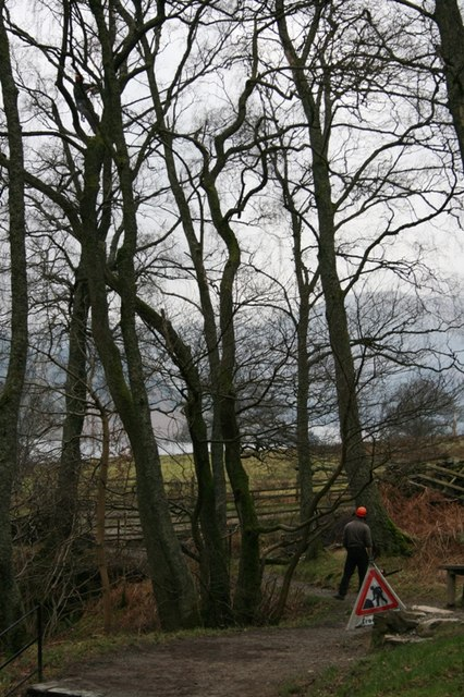 Tree Pruning by the National Trust
