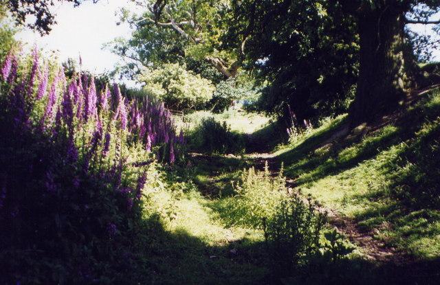 Offa's Dyke Path, near Trefonen