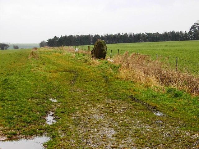 Field margin, Fiddler's Hill, Hackpen, Wiltshire
