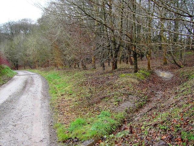 Shoulder of Mutton Plantation, Hackpen Hill, Wiltshire