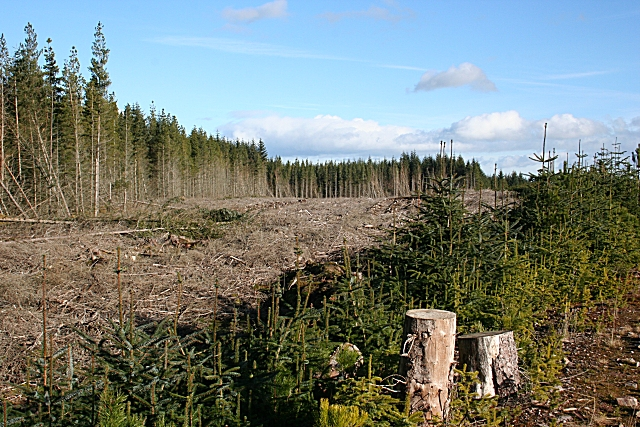 Felled area
