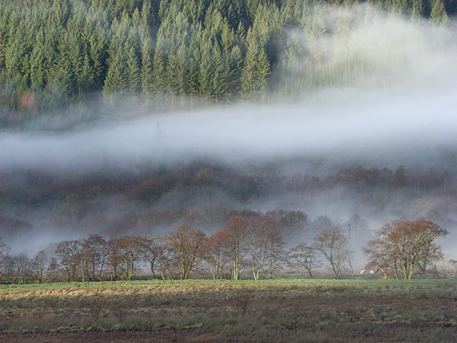 Trees and mist, Strathyre