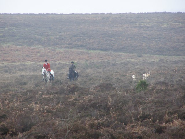 Hunt on the heath west of Pig Bush, New Forest
