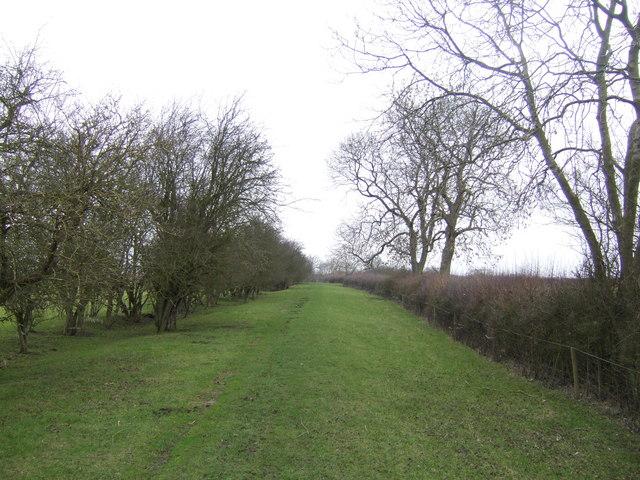 Red Road - green lane