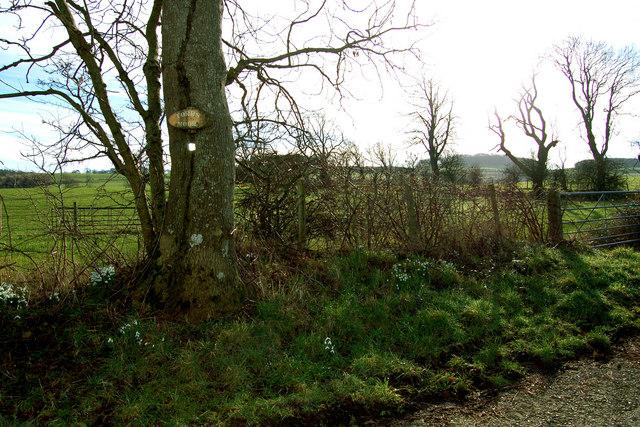 Torrs Moor, Galloway